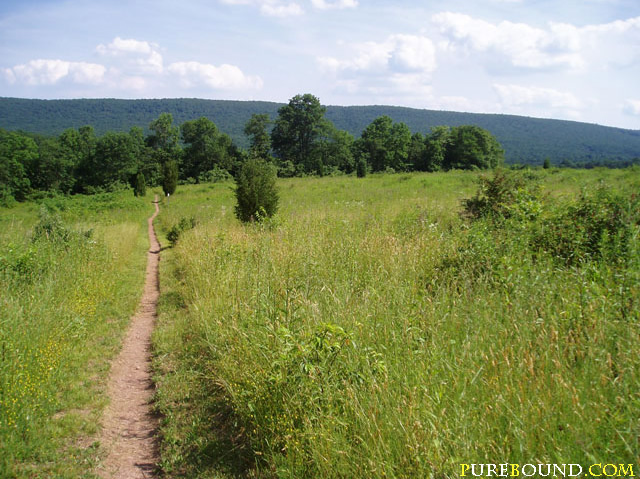 Even ground on the Appalachian Trail