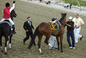 Barbaro Comes Up Lame in the Preakness
