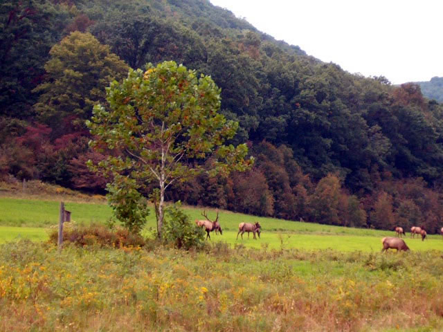 Viewing Elk at Hicks Run